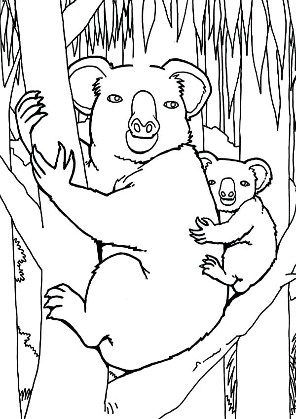 Koala Bear In The Jungle Coloring Page Color Luna In 2020 Jungle Coloring Pages Bear Coloring Pages Coloring Pages