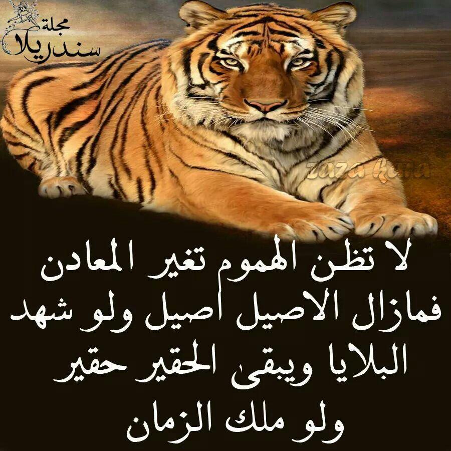 الهموم لا تغير المعادن Quotations Words Arabic Quotes
