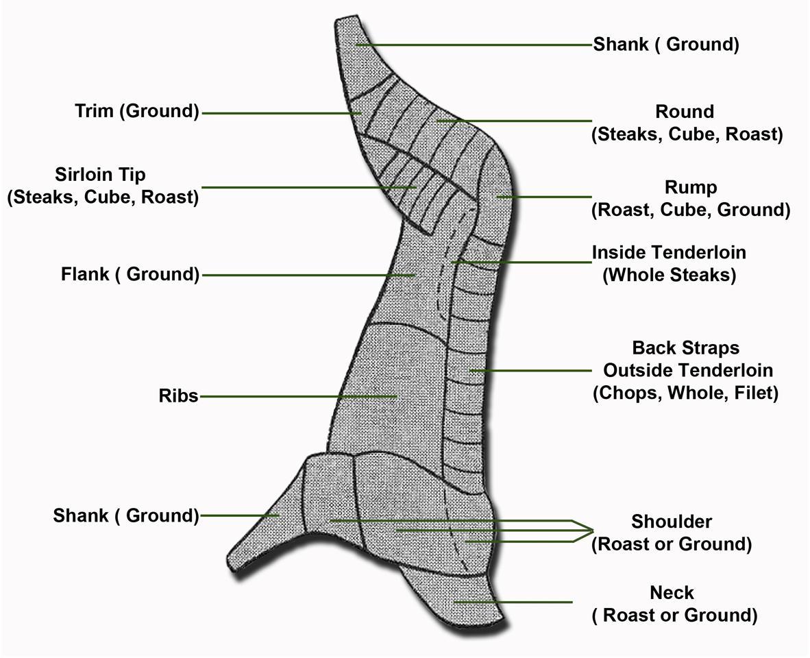 Deer Backstrap Diagram Butcher Recipe 33