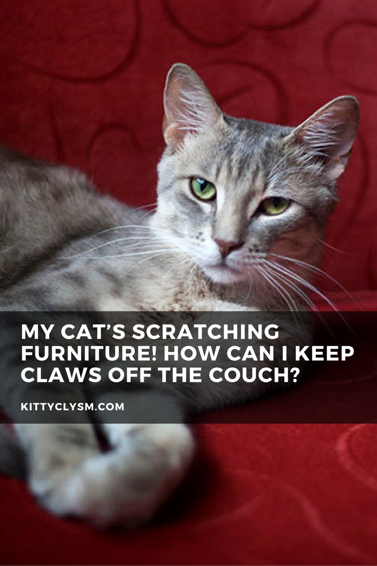 Cat Training Scratching My Cat S Scratching Furniture How Can I Keep Claws Off The Couch Have A Cat Who Claws Up Yo In 2020 With Images Cat Scratching Furniture Dog Couch Cats