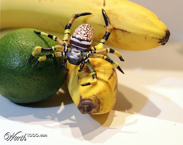 Banana Spider It Is The Real Size It Could Be A Halloween Cake