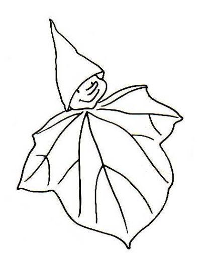 Ősz, ősz, ősz... - Borka 2 - Picasa Webalbumok   Ősz / Autumn ...