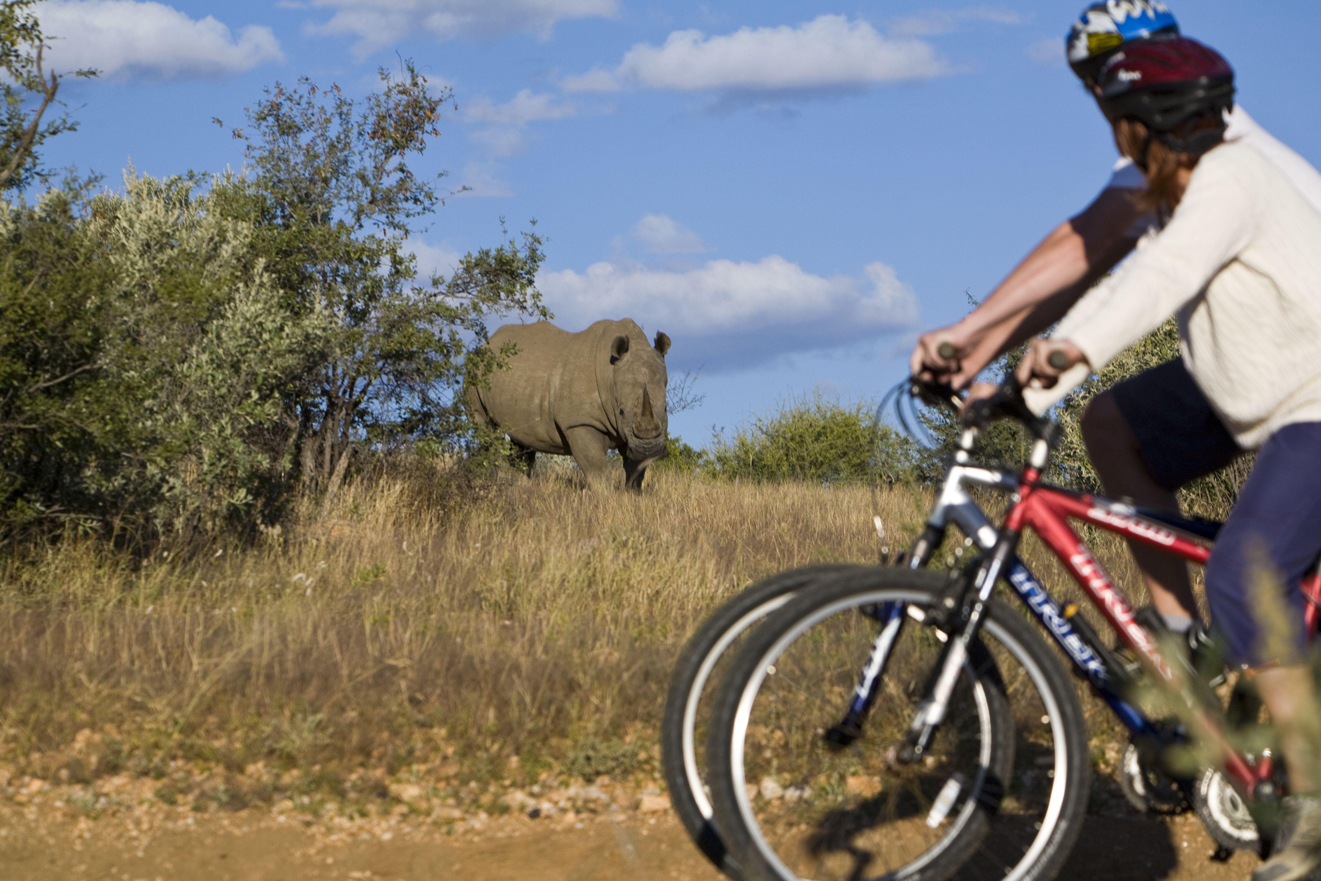 Mbweha Safari Camp Kenya Go On Guided Walks Horse Riding