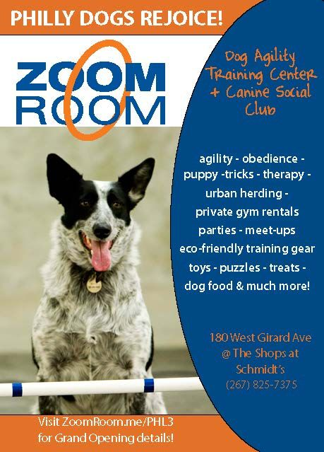 Zoom Room Dog Agility Four Legged Training Center