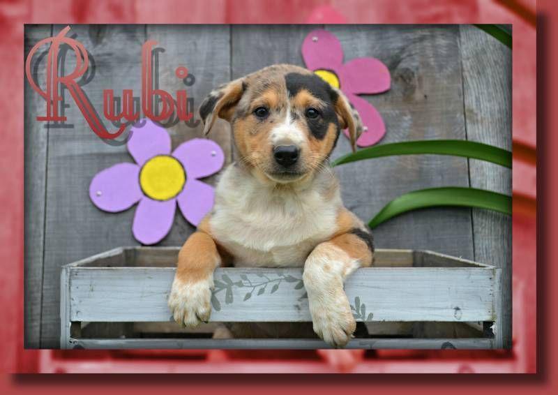 Park Art My WordPress Blog_Border Collie Puppies For Sale In Pa Craigslist