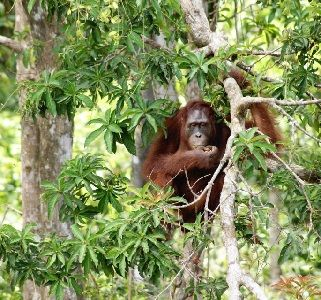 Tanjung Puting in Borneo Indonesia