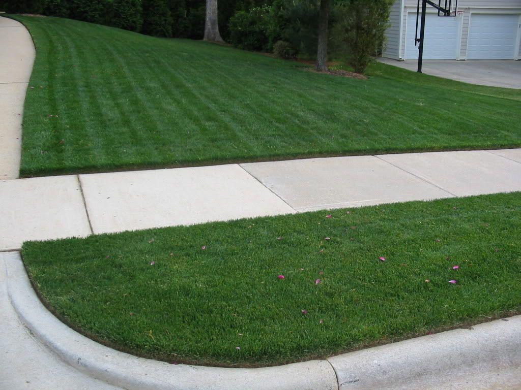 Alfalfa In Place Of Grass Landscape Decor Lawn Landscape