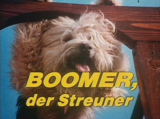 Photo of Boomer, der Streuner