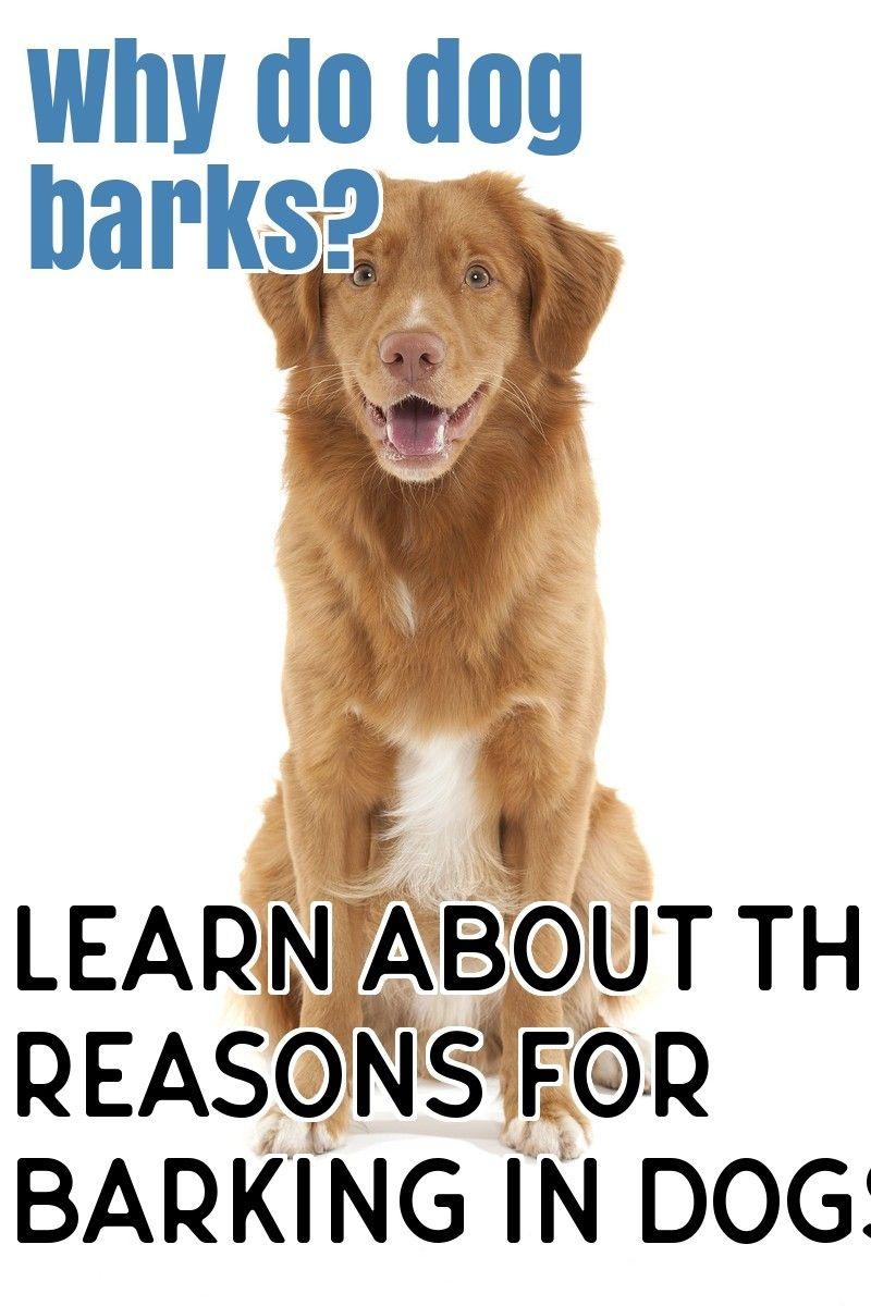 Why Dogs Barking Dog Barking Dogs Stop Dog Barking