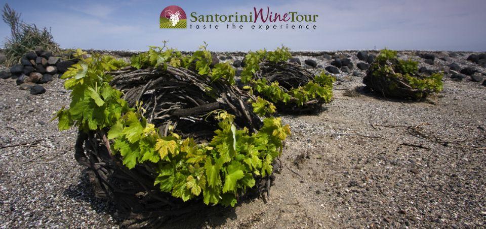 Ecotourism+Santorini+Wines.jpg (960×454)