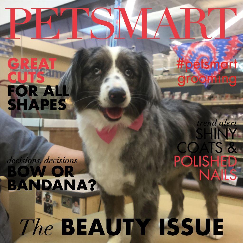 Petsmart Grooming Academy Stylist Apprentice Kaitlyn Elliana Petsmart Petsmart Grooming Animal Photo