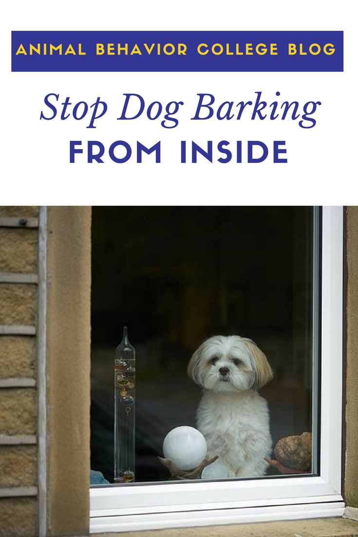 Tips For Dogs Barking At Passersby From Inside Their Home Dog