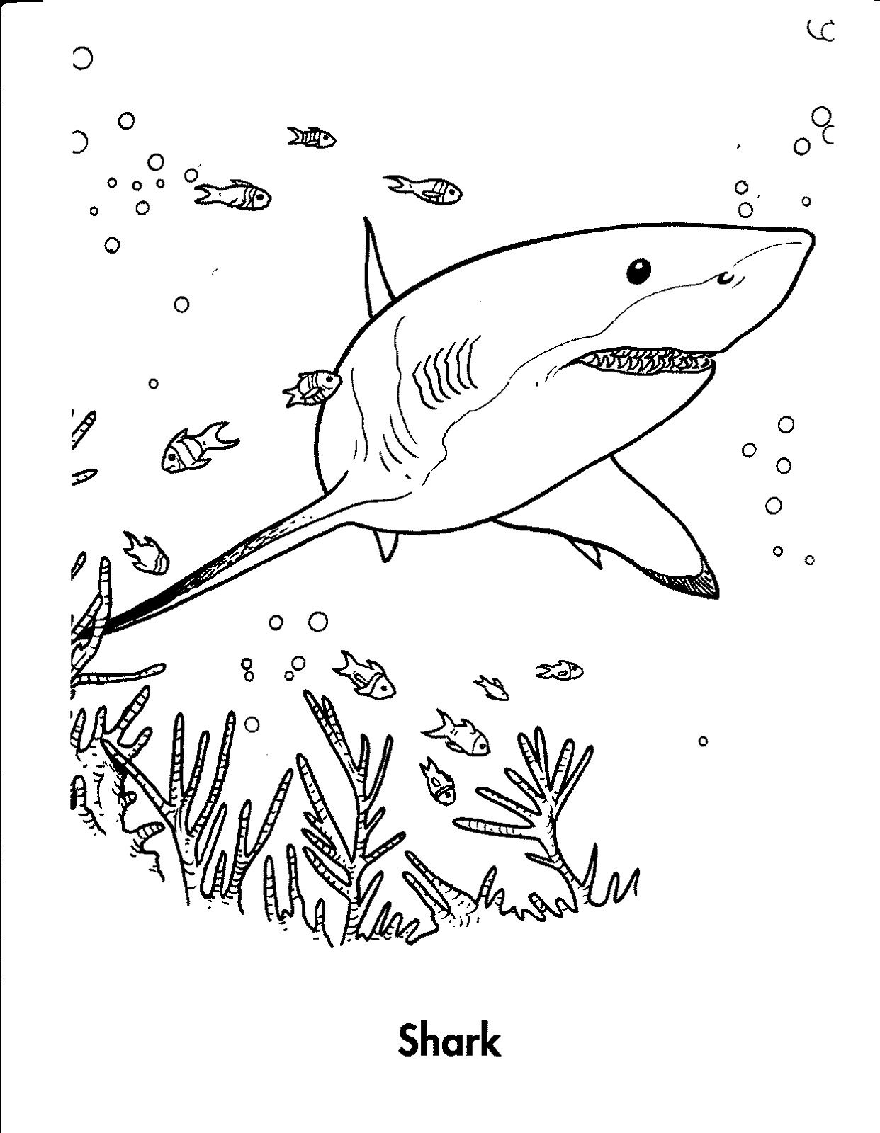 Uncategorized Shark Worksheets shark sheets for kids activity shelter worksheets pinterest shelter