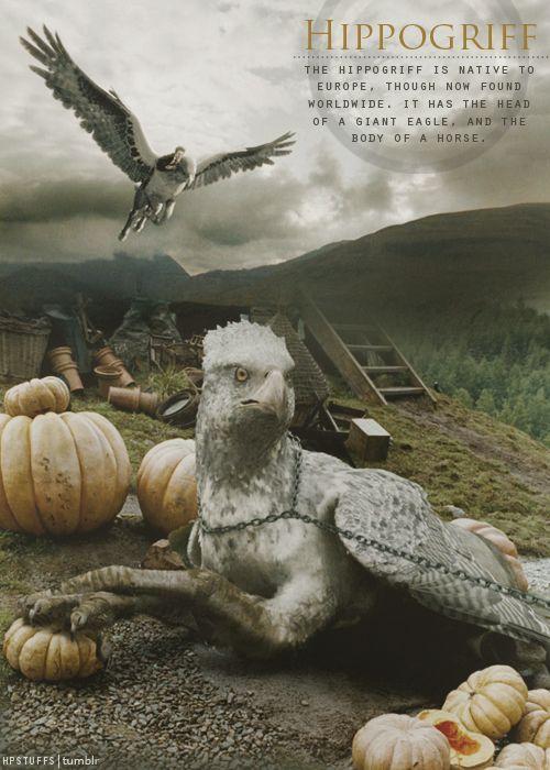 Harry Potter Stuff Harry Potter Film Seidenschnabel Magische Tiere