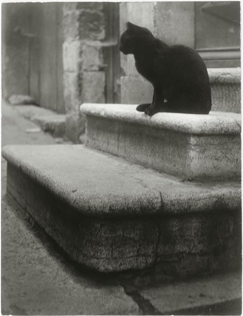 Le Chat Noir. 1945. Photographer: Brassaï