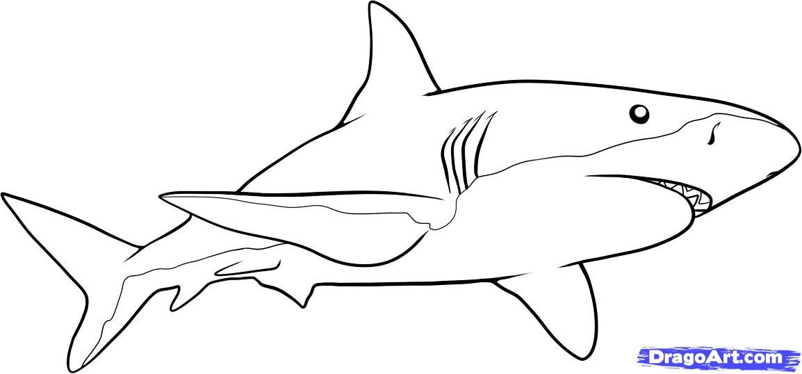 How to draw a shark step by step fish animals free for Step by step drawing websites