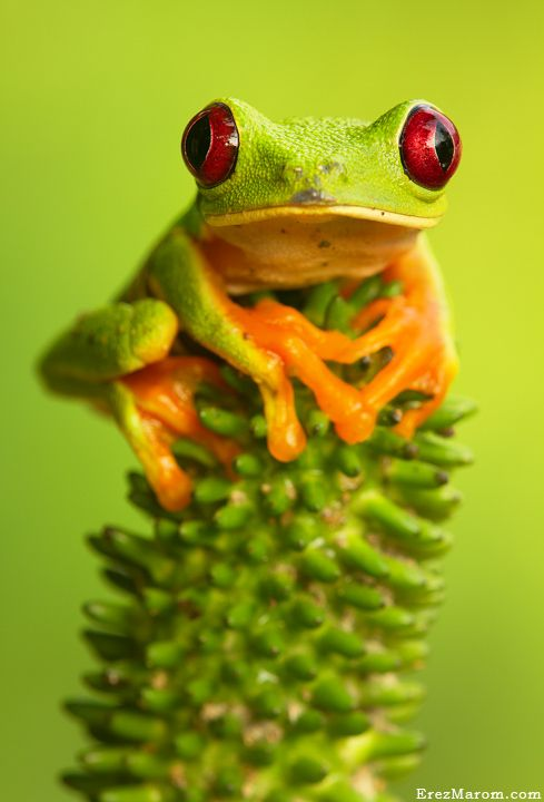 Little green frog ✿⊱╮