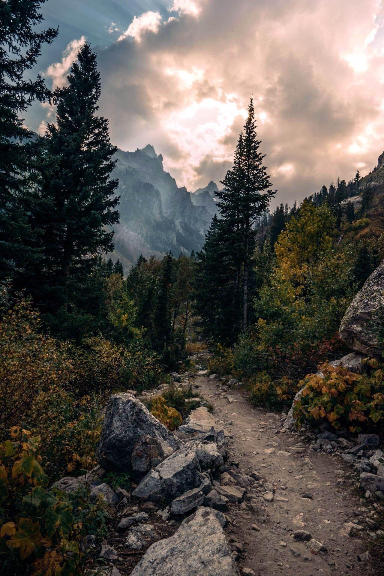 3 Tage Im Grand Teton National Park Forest Forest Grand Im National N 3 Tage Im Grand Teton In 2020 Nature Photography Beautiful Landscapes Landscape