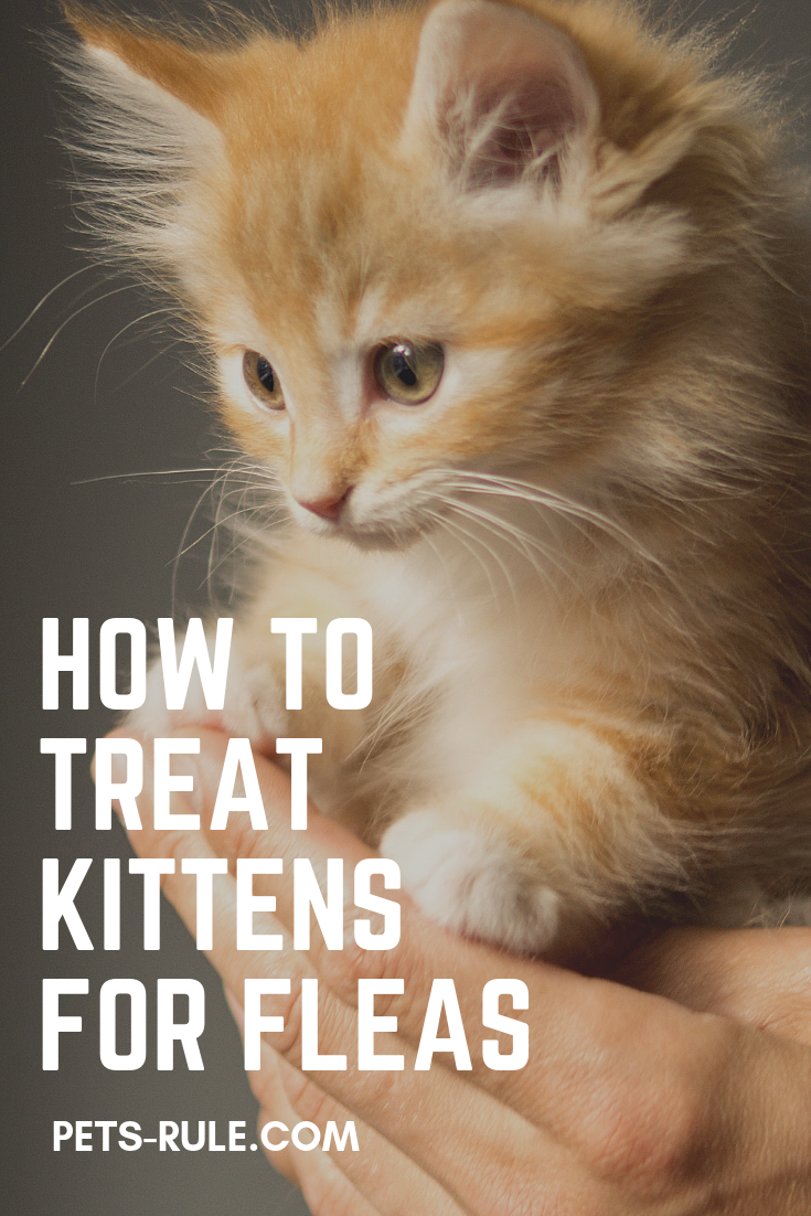 How To Safely Treat Kittens For Fleas Flea Treatment For Kittens Kittens Fleas