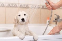 Bagno Cane ~ Oltre fantastiche idee su bagno di cane su idee per