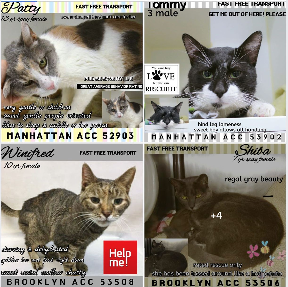 6 Cats To Die 02 07 19 Foster Cat Cat Adoption Cat Birthday