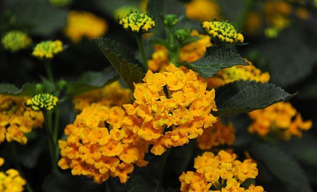 Birmingham Botanical Gardens Spring Plant Sale