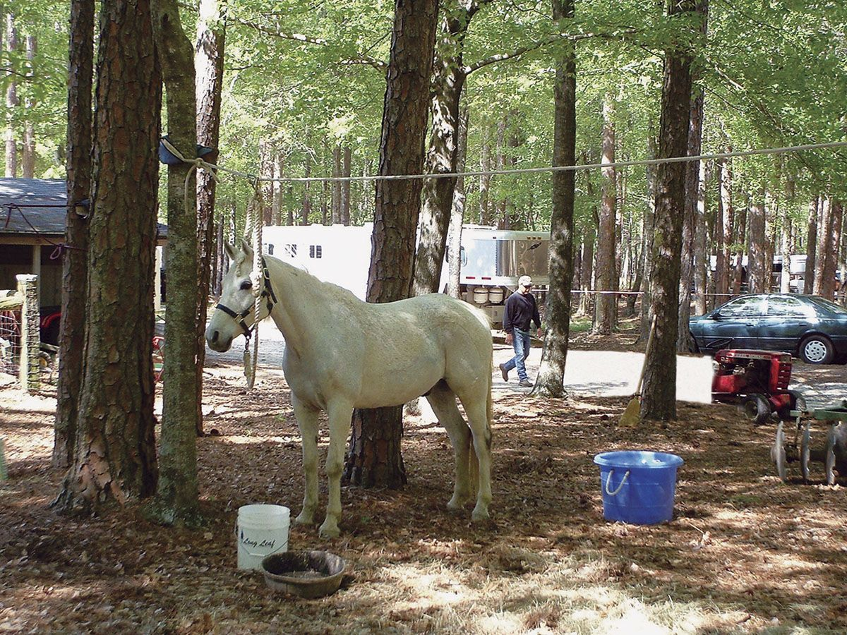 Have You Tried: Overnight Horse Camping | Horses | Trail ...