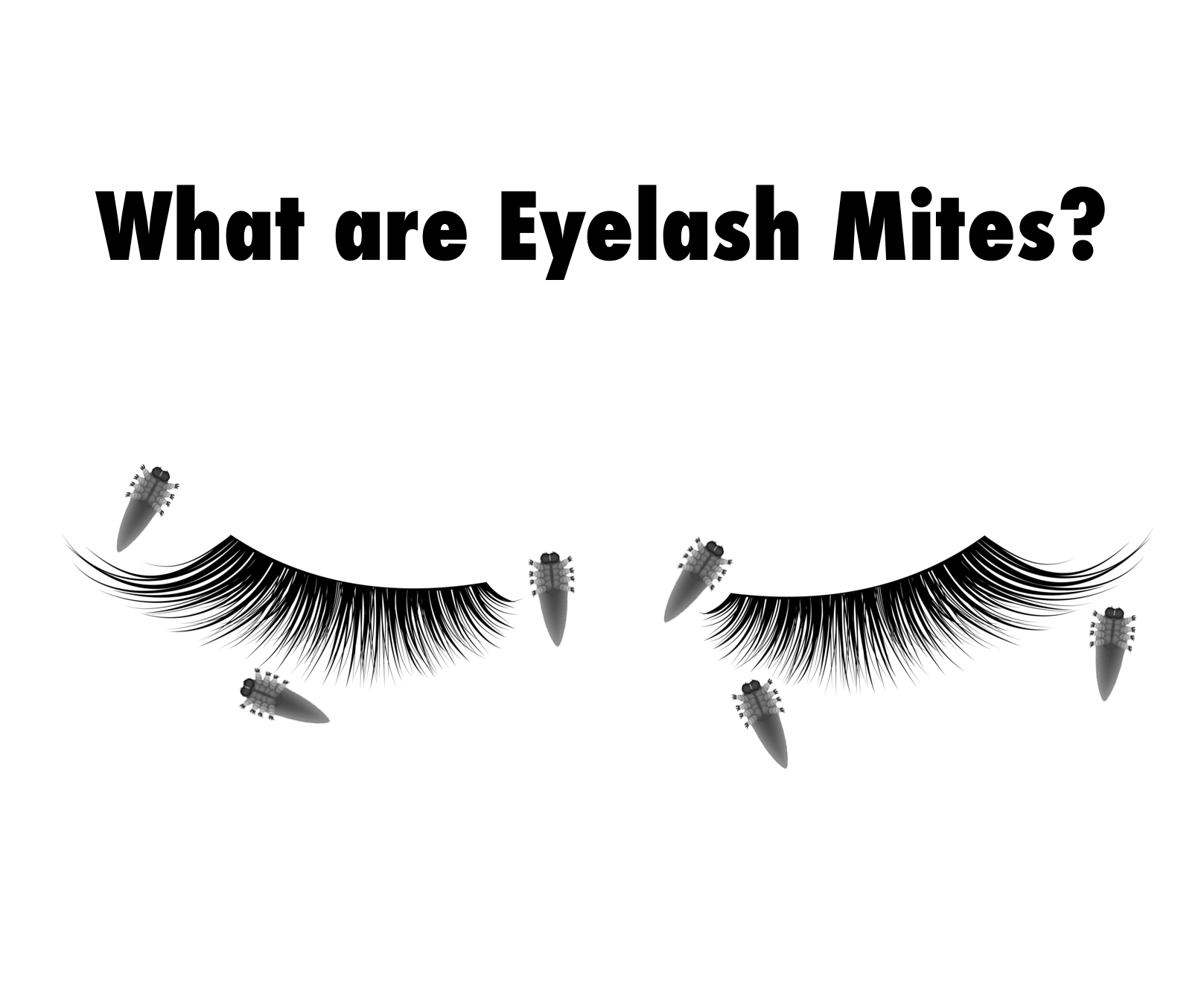 What Are Eyelash Mites Our Blog Eyelashes Blog