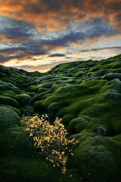 Moss covered lava fields - Laki, Iceland