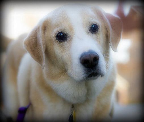 Adopt Easy Amigo - Apartment Dog! on   Foster dog ...