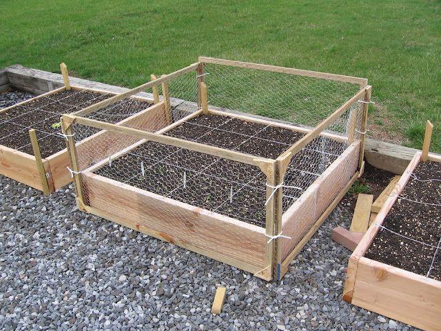 Picasa Web Albums Luke Eelman Chicken Garden Garden Boxes Veg Garden