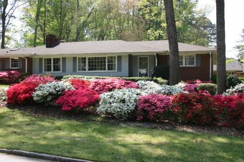 Front Yard Landscaping With Azaleas I Love Azaleas Landscape Ideas Front Yard Curb Appeal Azaleas Landscaping Front Yard Landscaping