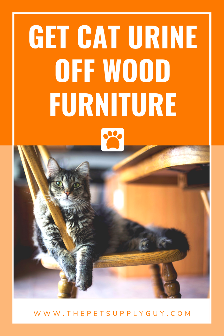 How To Get Cat Urine Out Of Wood