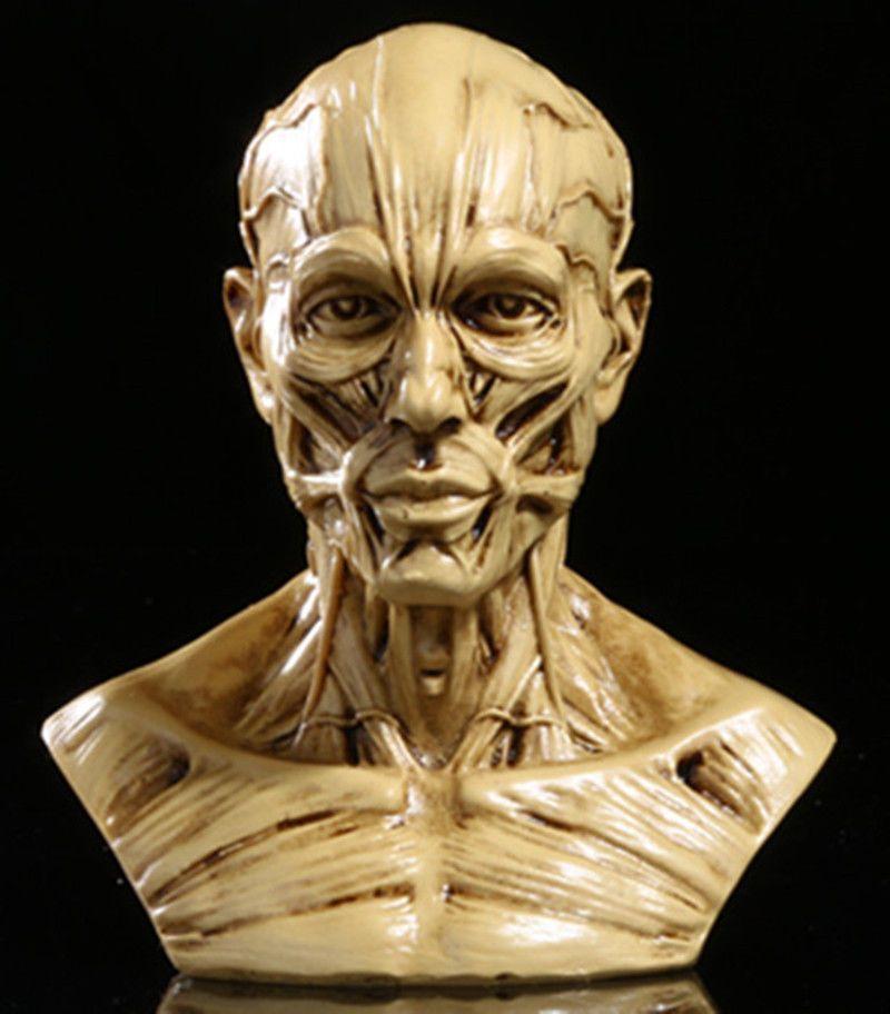 Medical Artist Drawing Study-10cm Human Model Anatomy Skull Head Muscle Bone