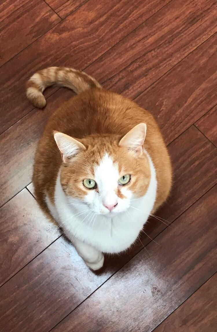 9 Years Ago We Found This Sweet Boy Abandoned In A Dumpster He Was The Cat To Turn Cat Haters Into Lovers Rip Wesley Ill Mi Cats Orange Cats Cats And Kittens