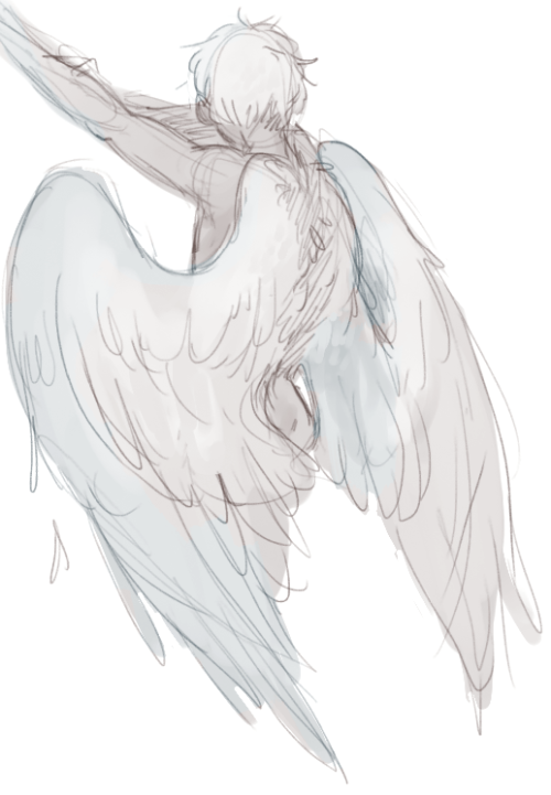 for feathers great and small | Wing Stuff | Wings sketch ...
