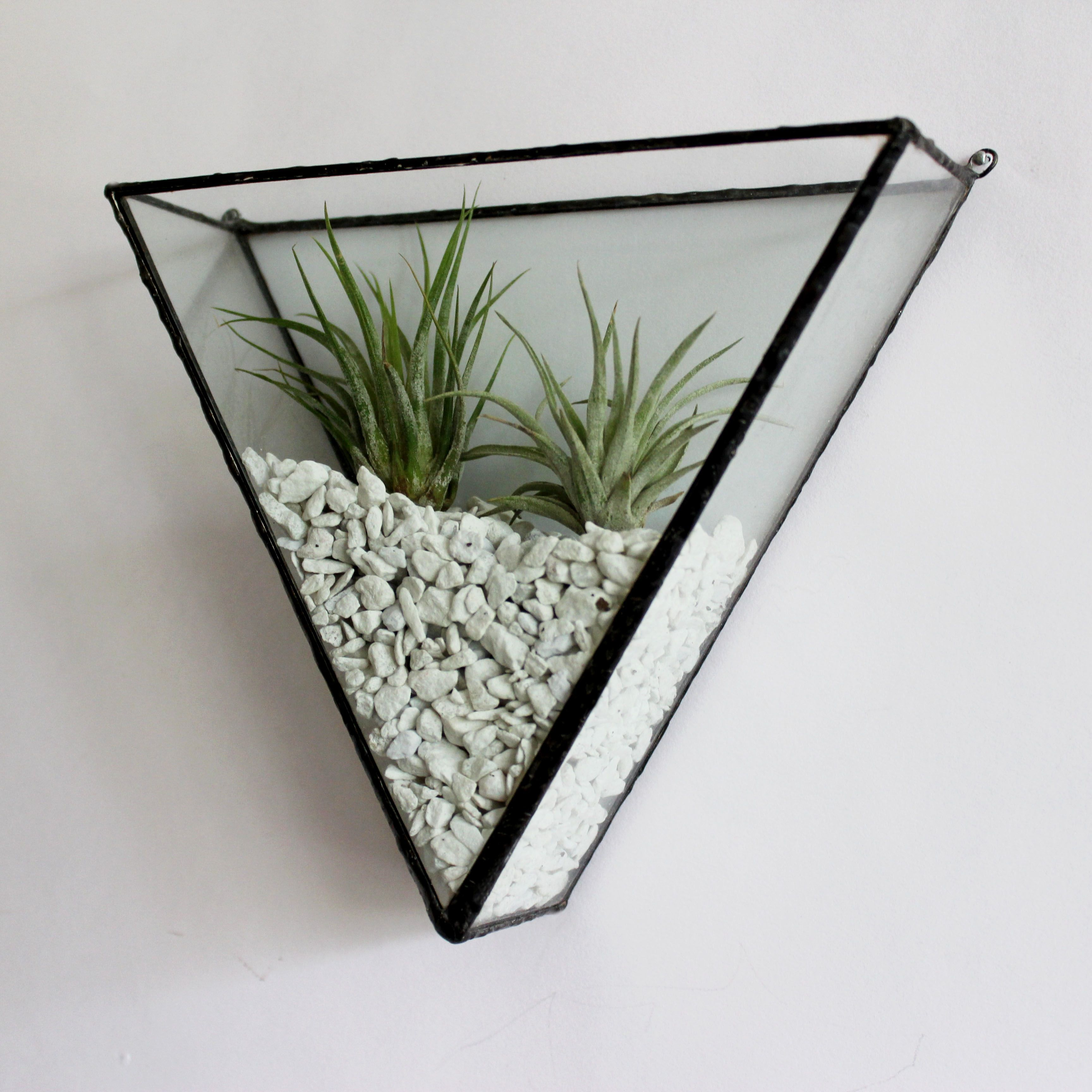 Ada Triangle Glass Wall Mount Air Plants Decor Plant Decor Plant Wall