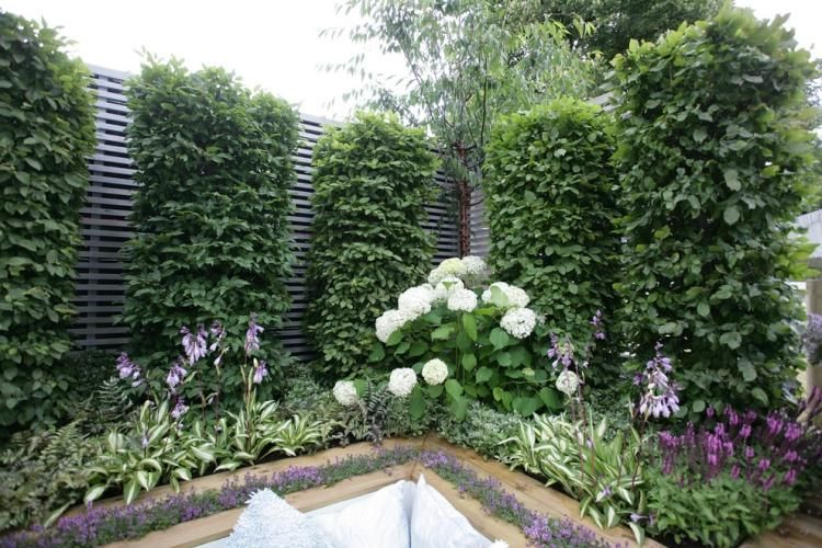 arbre pour petit jardin les vari t s petit d veloppement petits jardins jardins. Black Bedroom Furniture Sets. Home Design Ideas