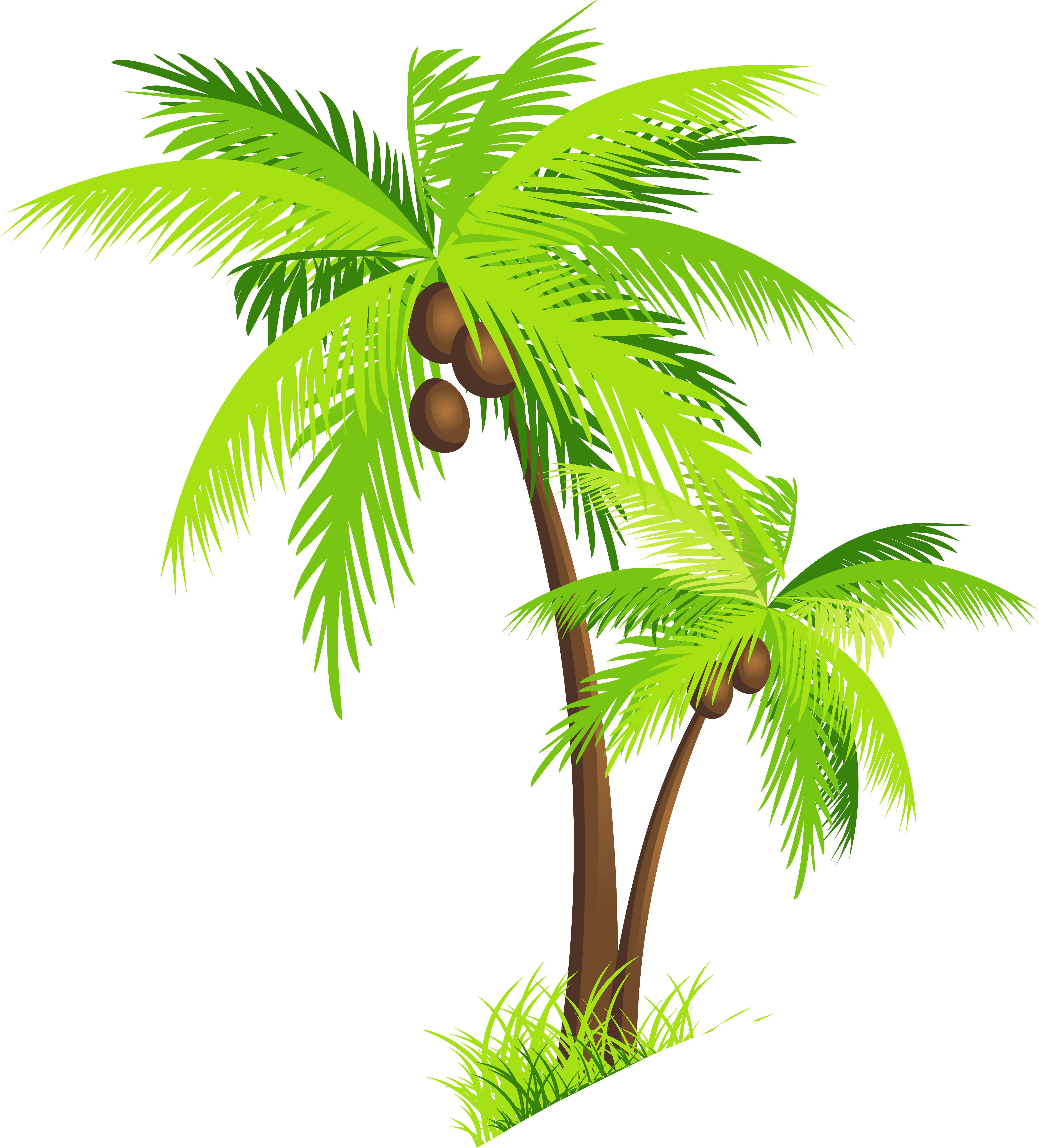 palm tree coconut clipart free images [ 6146 x 6787 Pixel ]