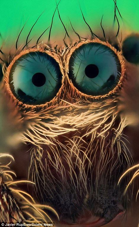 Eerie close up photos of JUMPING spiders eyes will send you running!