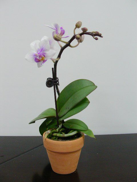 house plants with flowers - Flowering House Plants Purple
