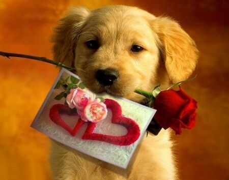 Cute Puppies With Roses Romantic Pictures For Couples Crush Cute Puppies Socializing Dogs Dog Valentines Dog love wallpaper hd download