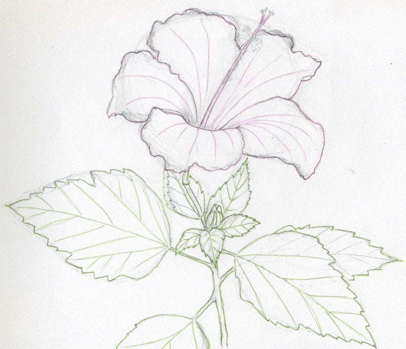 Flower Flower Drawing Tutorials Flower Sketches Flower Drawing