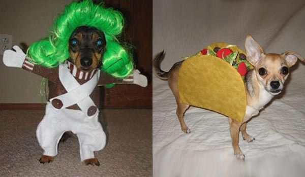 Funny-Dog-Halloween-Costumes Party ideas Pinterest Funny dog - ridiculous halloween costume ideas