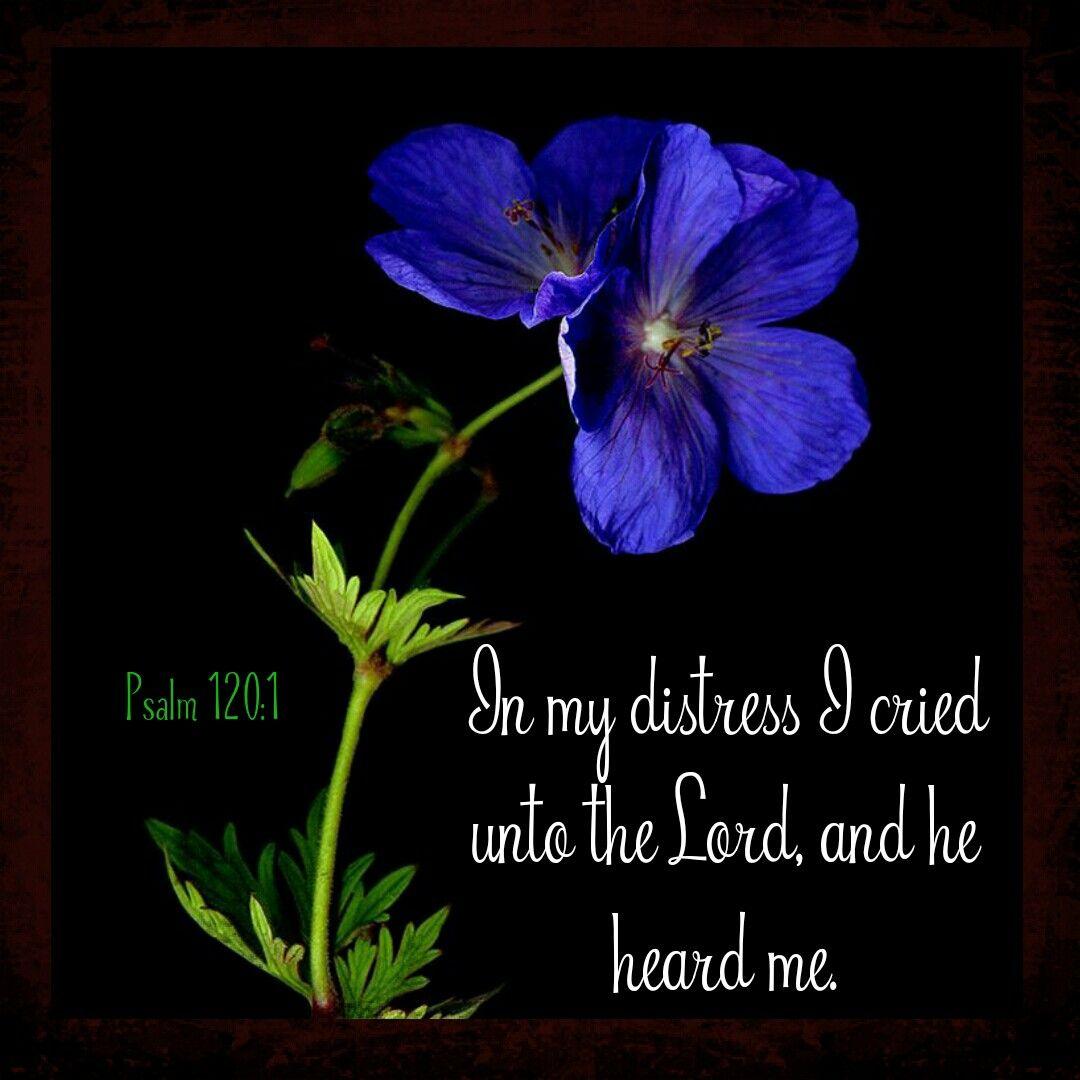 Psalm 120:1 KJV | prayers | Pinterest | Citas de lecturas ...