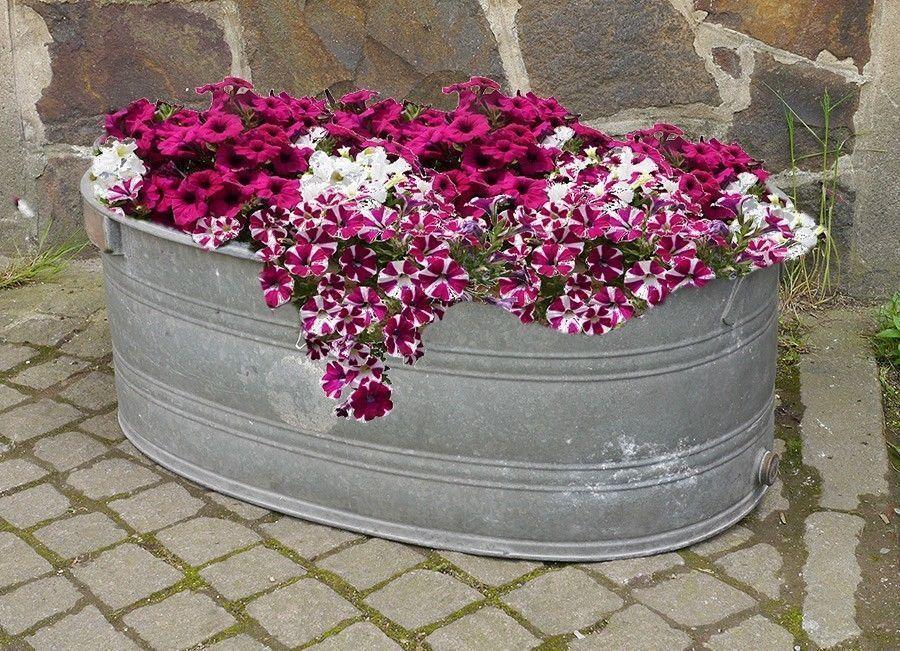 dekorative Zinkwanne, Wanne, Blumenkübel, Miniteich, f Seerose - pflanzgefase im garten ideen gestaltung