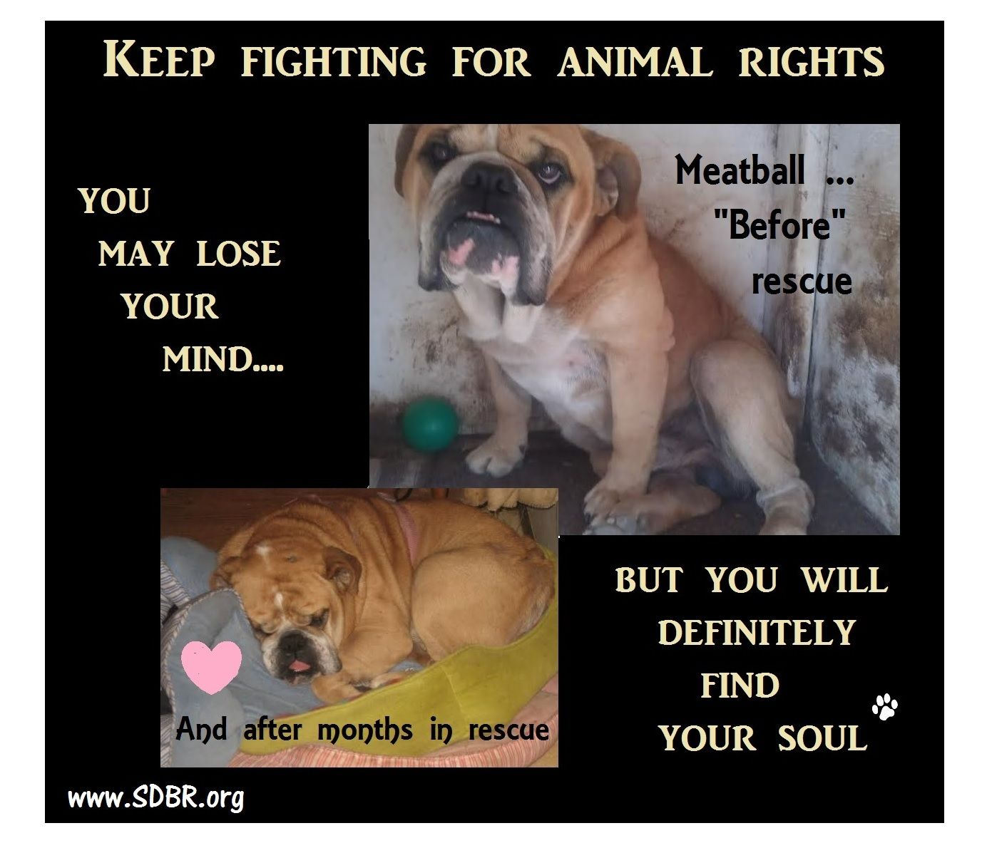 Www Sdbr Org Our Mission Is To Find Permanent Loving Homes For