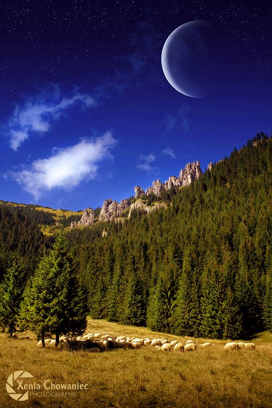 Фото Стадо овец на лугу на фоне красивого пейзажа, by ...
