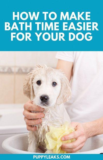 how many times to bath a dog