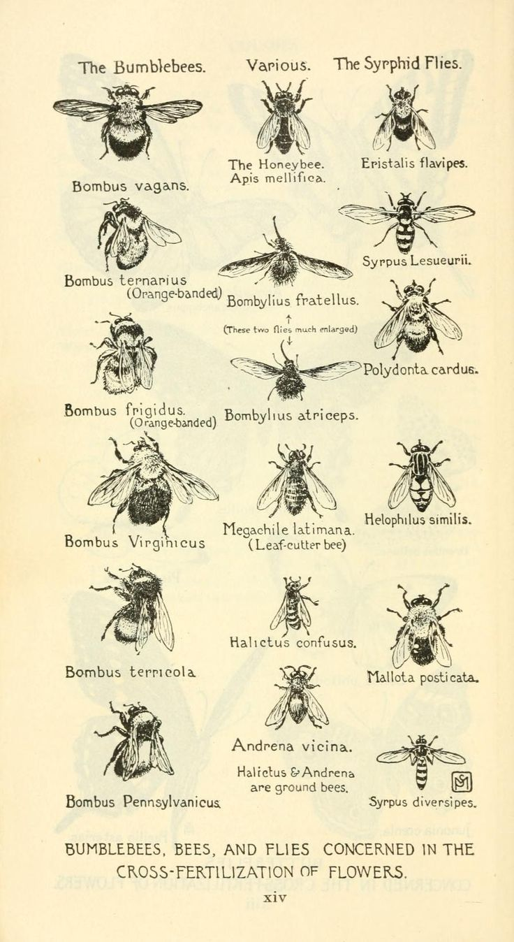 Visual directory of bees from old encyclopedia | Home : Garden ...